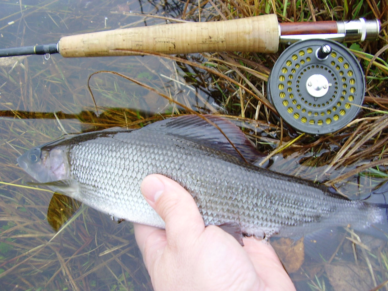 RIO SPEY AFS ST6//7F//I FLY LINE